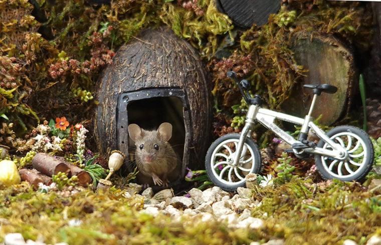 casa-para-ratones
