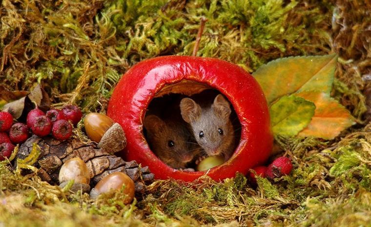 casita-para-ratones