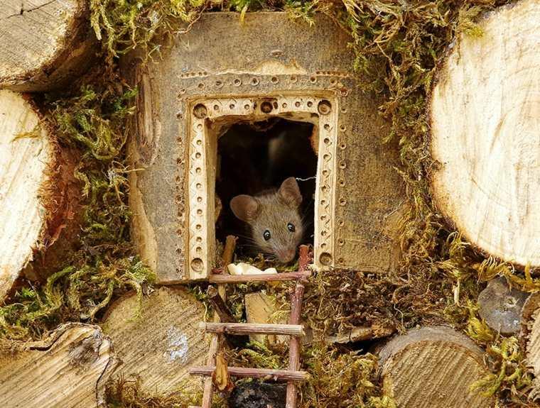 el pueblo de los-ratones-casita
