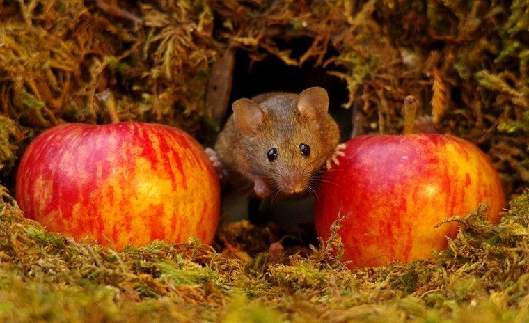 el pueblo de-los-ratones-detalle