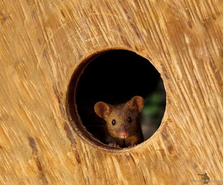 el pueblo de-los-ratones-foto