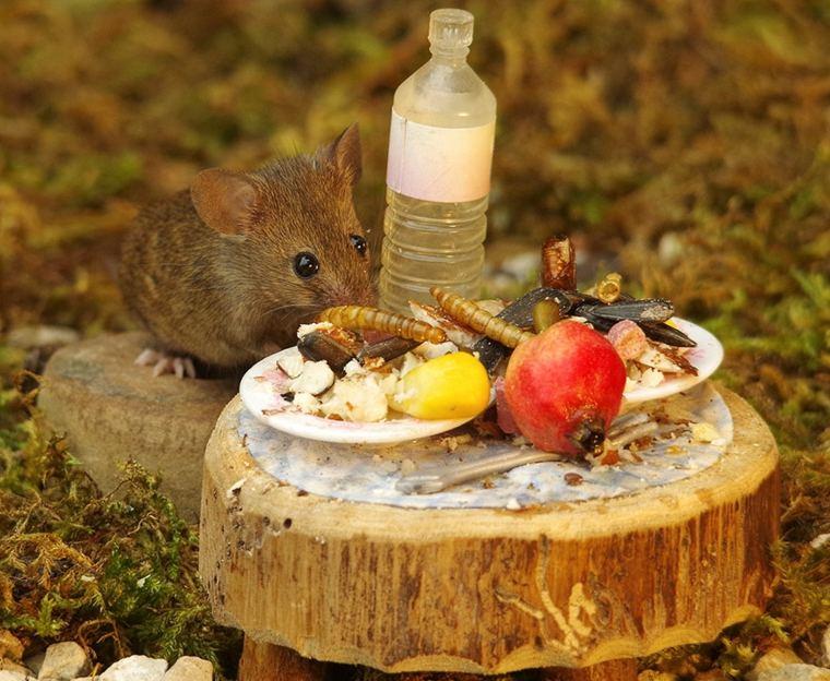 el pueblo de-los-ratones-mesa