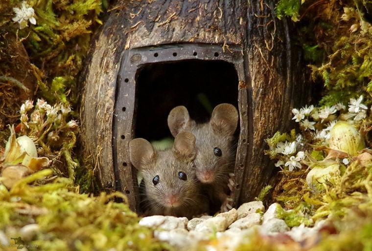 el pueblo de-los-ratones