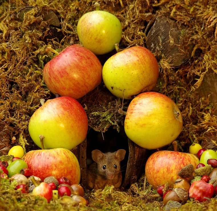 la-casa-del-ratón