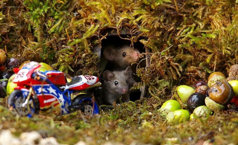 la-cueva-de-los-ratones
