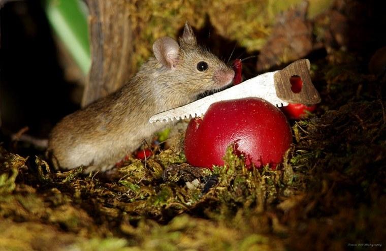 ratón-con-sierra