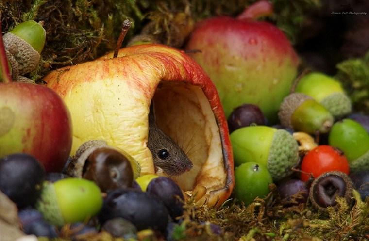 ratón-en-manzana
