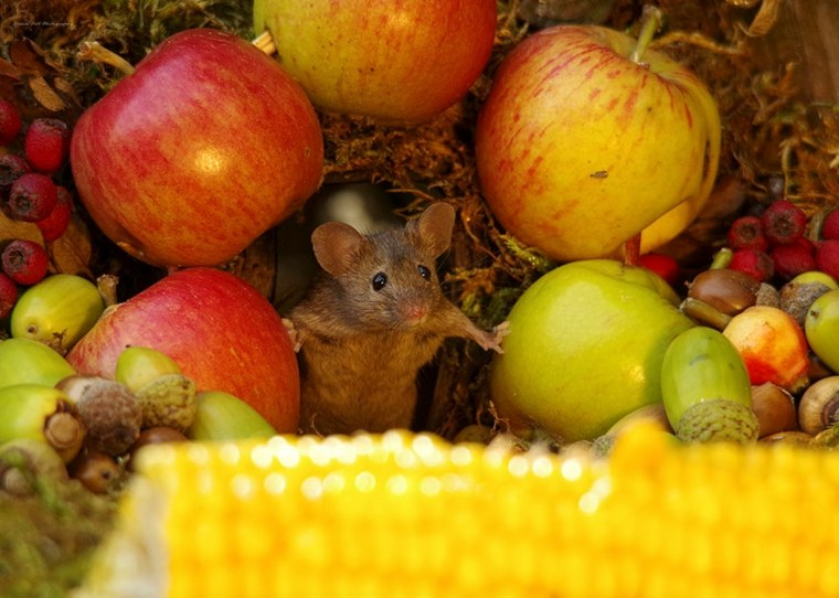 ratones-en el pueblo