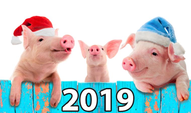 ano-nuevo-chino-cerdo-2019