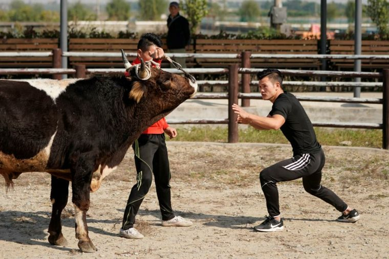 artes marciales lucha contra toros