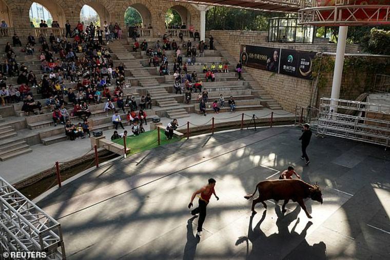 artes marciales y lucha de toros