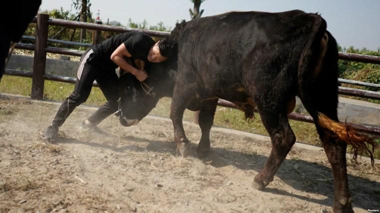 artes marciales y tauromaquia