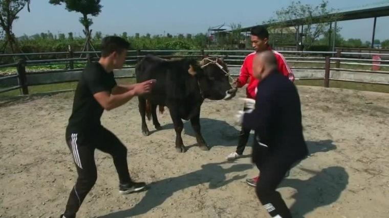 artes-marciales y toros aprendizaje
