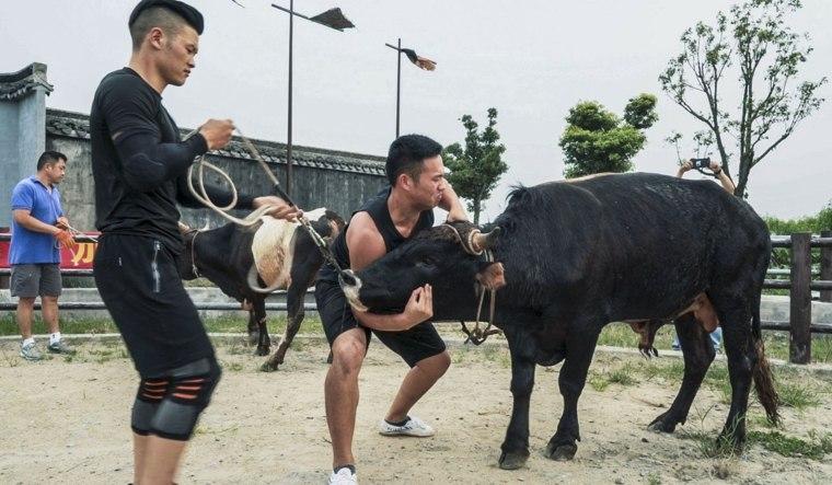 artes marciales y toros entrenamiento