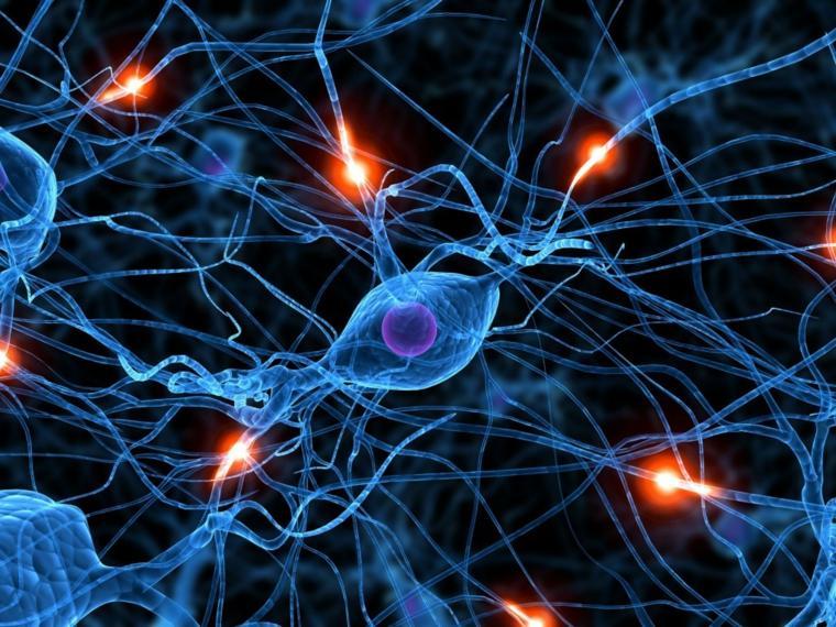 cerebro-sexo-funcionamiento-opciones
