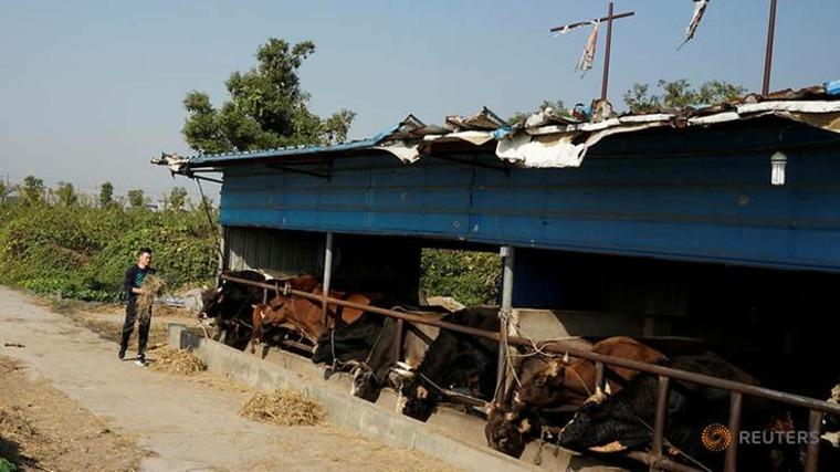 establo de toros para luchas
