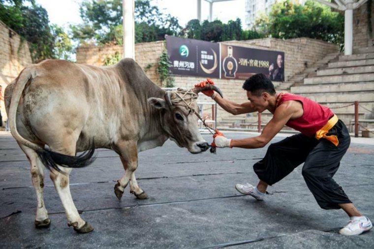 luchando contra un toro