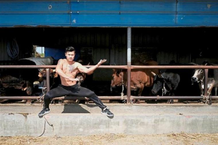 toros para luchas