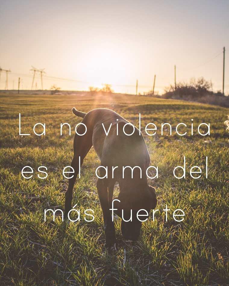 Mahatma-Gandhi-la-no-violesncia-es-la-arma-mas-fuerte