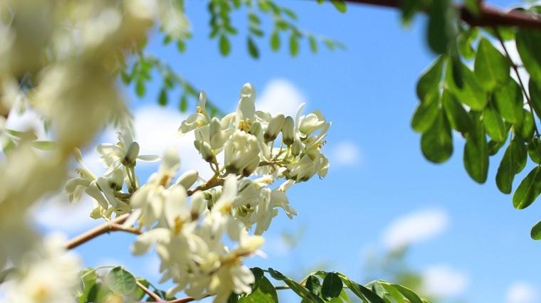 fatiga-primaveral-consejos-energia