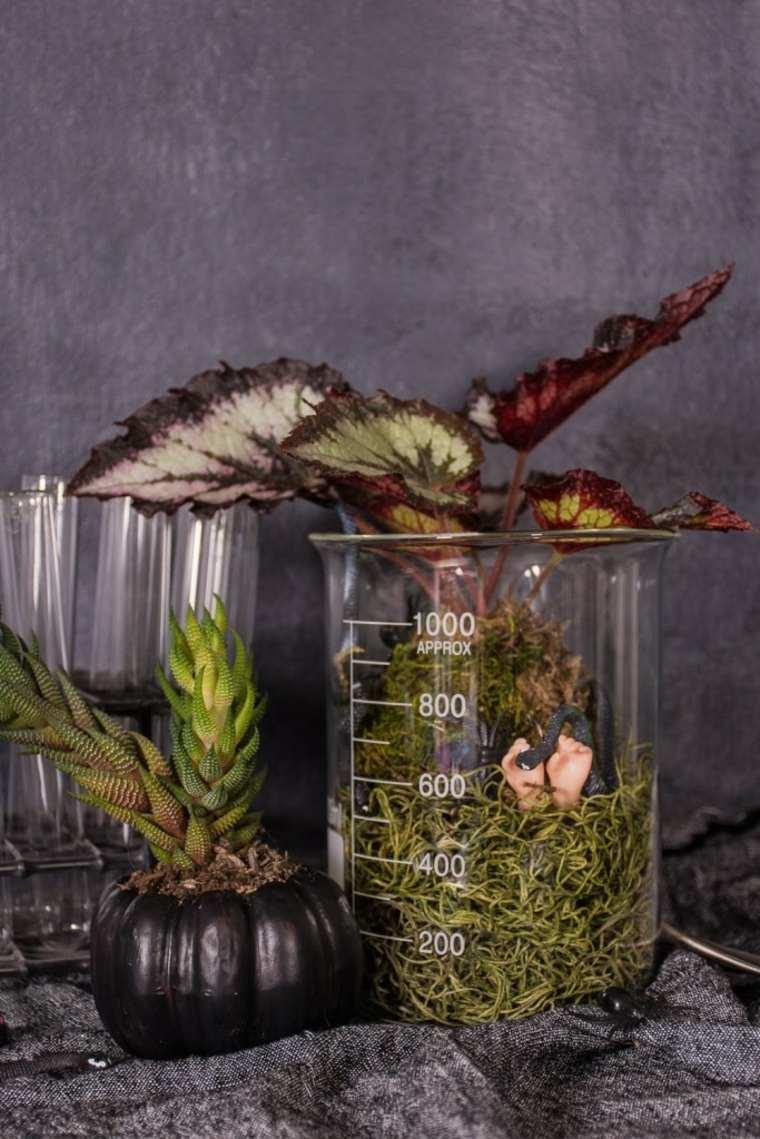 bonito-terrario-ideas-originales-estilo