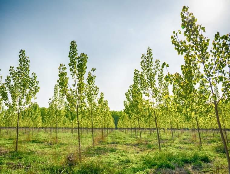 cambio-climatico-soluciones- bacteria-bosques
