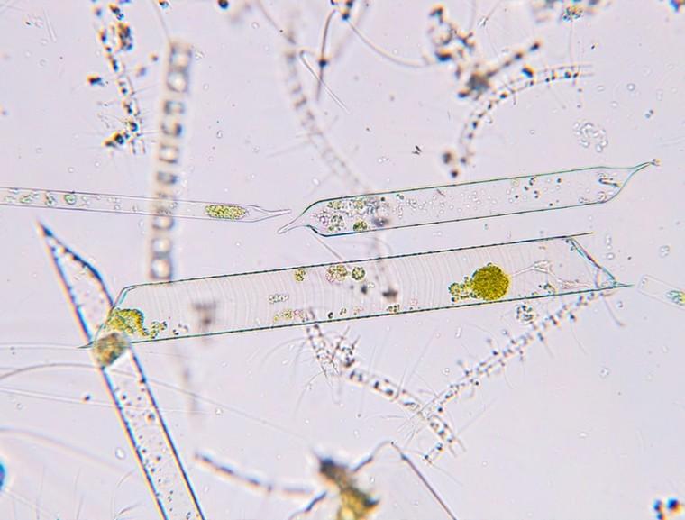 cambio-climatico-soluciones- bacteria-ideas