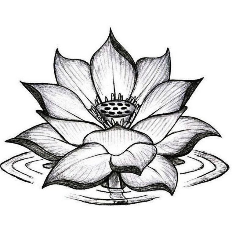 diseno-opciones-estilo-lotus-opciones