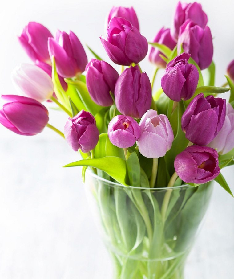 tulipanes-color-ideas-purpura
