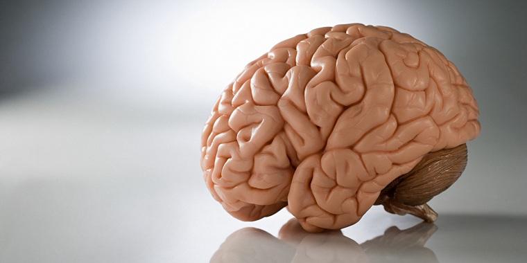 salud de tu cerebro-opciones