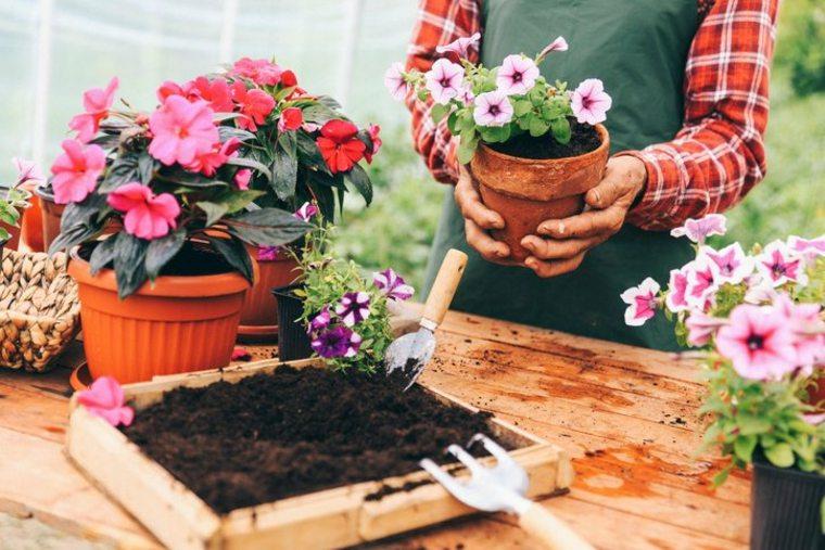 decoración de jardines colores