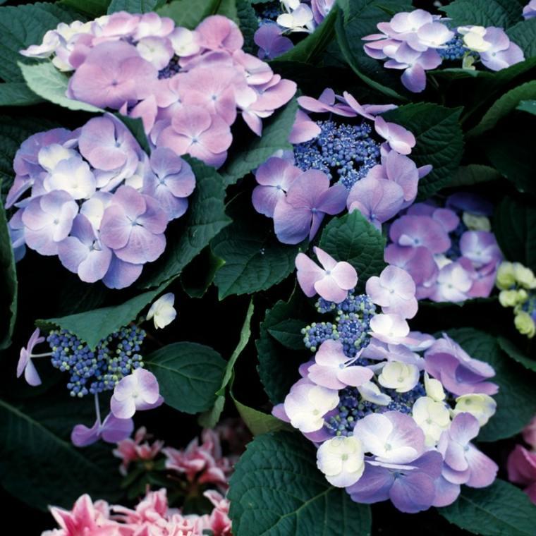garden design colorful flowers