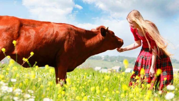 los vegetarianos protegen los animales