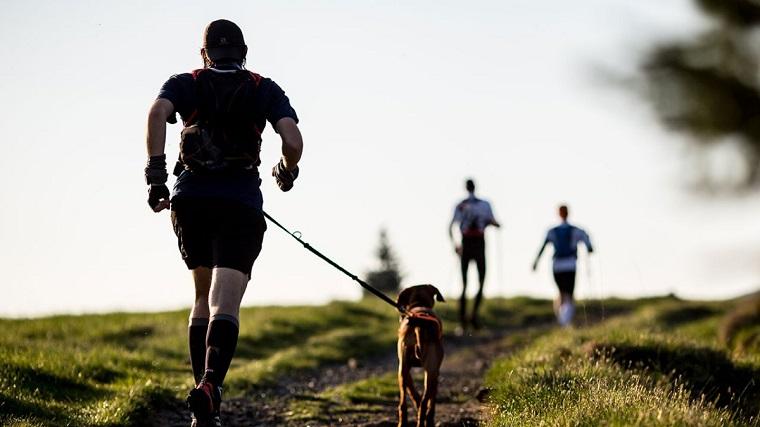 mejores razas correr-perros