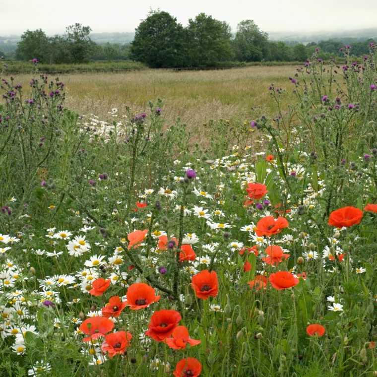prado natural en el jardín