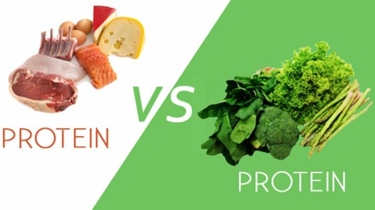 proteínas animales vs vegetales