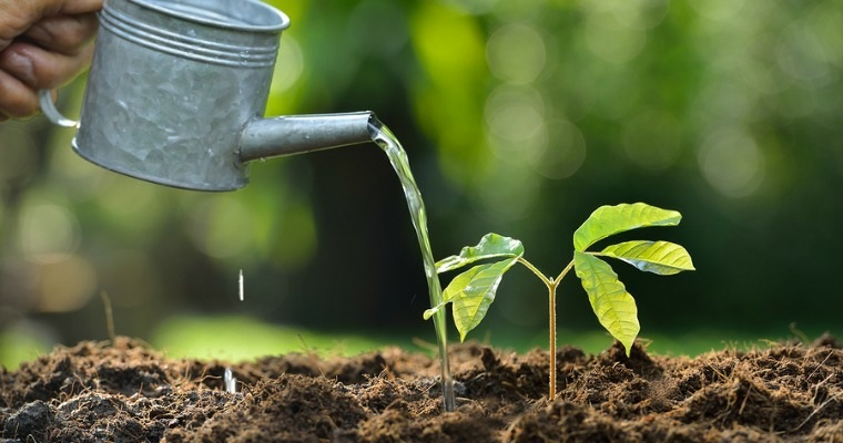 cultivo y riego de plantas