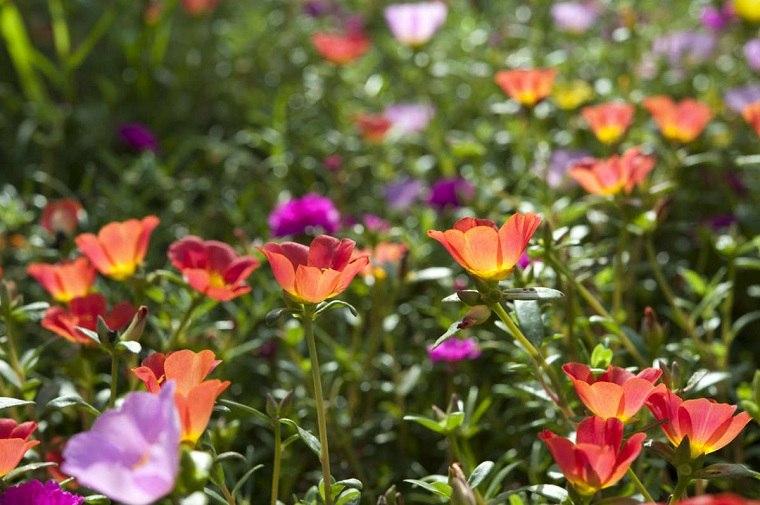 flores-jardin-consejos-riego