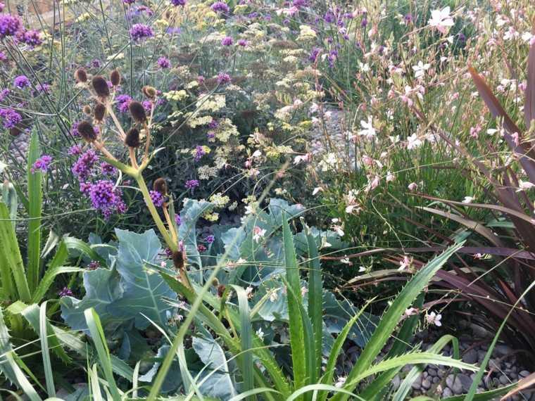 jardinería en casa plantas-belleza-ideas