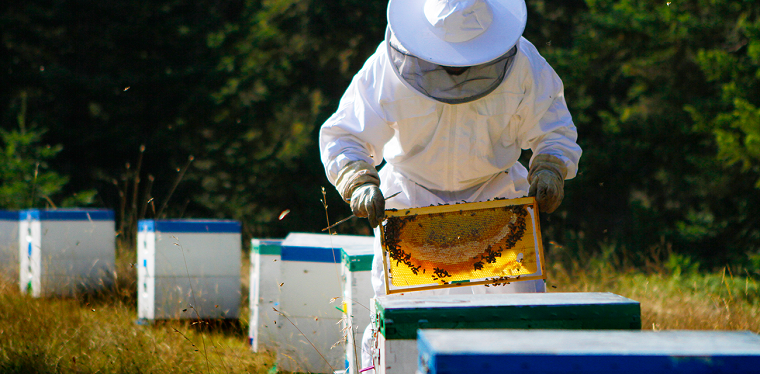 las abejas-mundo-estudio