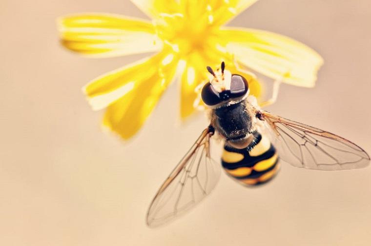 las abejas-numeros-ideas