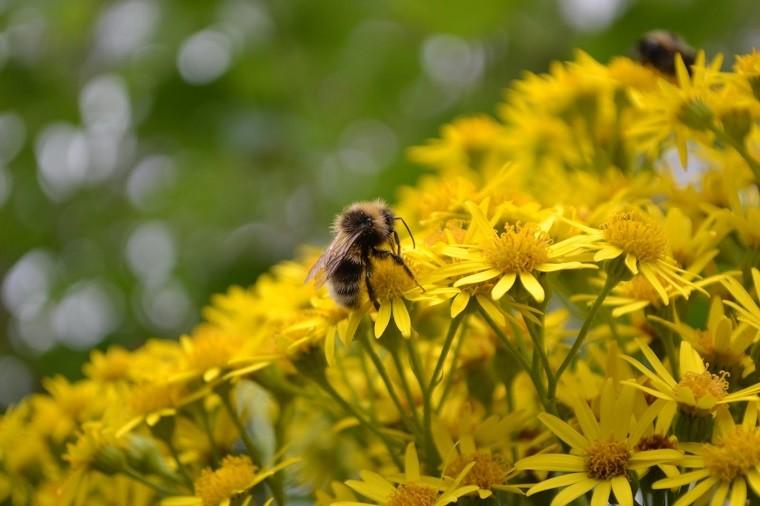 las abejas-pueden-contar-numeros