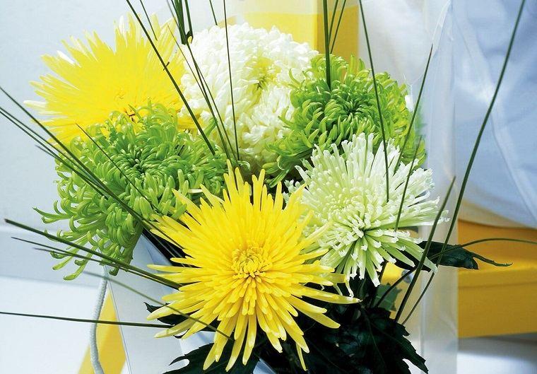 plantas de interior-alergias-Crisantemo-morifolium