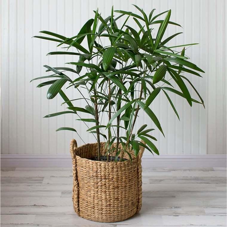 Plantas de interior que ayudan a aliviar a los síntomas de alergia