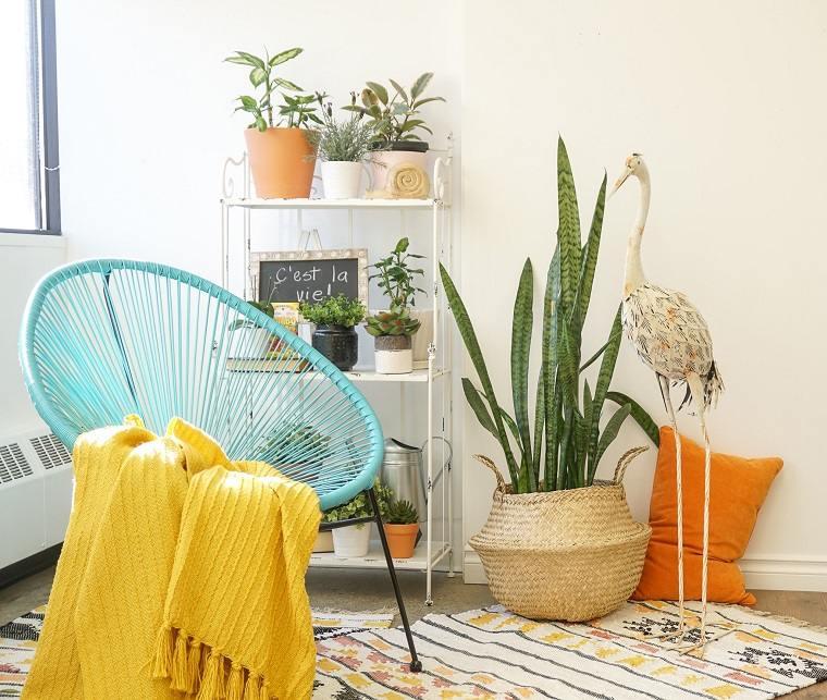 plantas-de-interior-alergias-Sansevieria-trifasciata-ideas