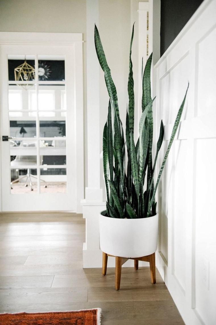 plantas-de-interior-alergias-Sansevieria-trifasciata