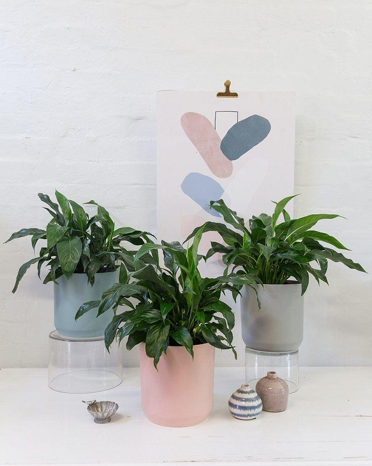 plantas de interior-alergias-lirios-de-la-paz
