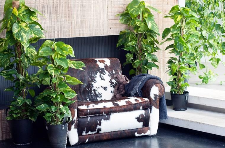 plantas-de-interior-alergias-potus-ideas