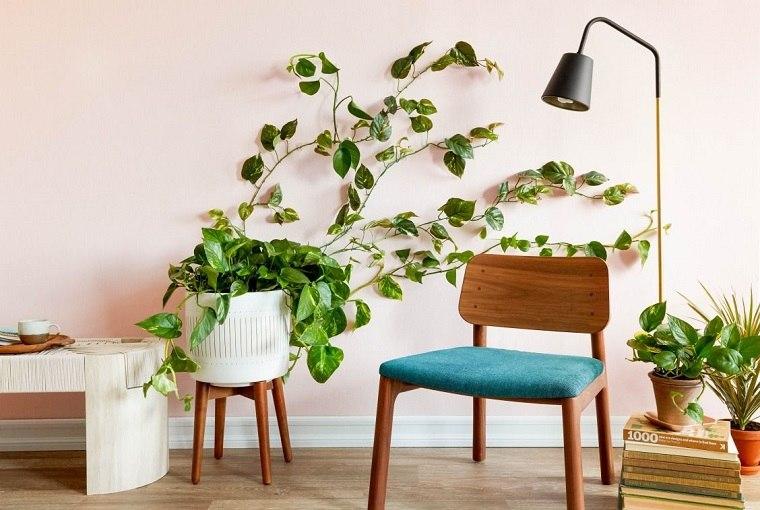 plantas-de-interior-alergias-potus