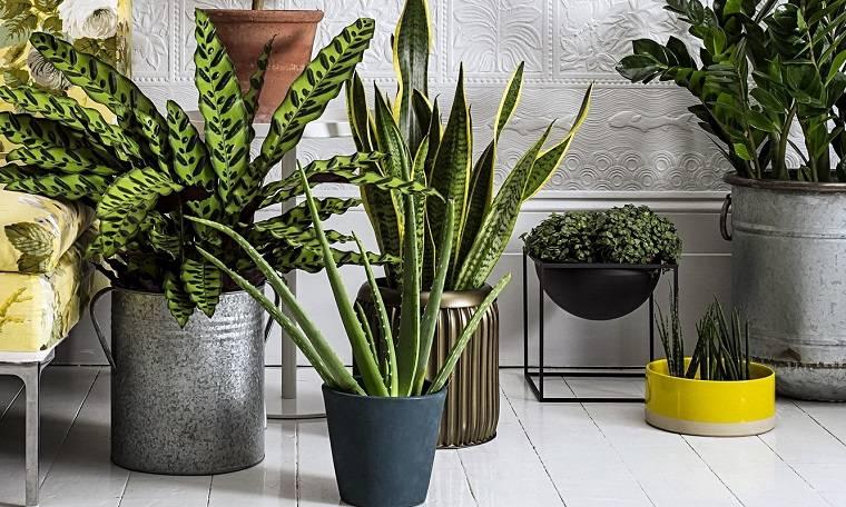 plantas de interior mejorar-sintomas-alergia